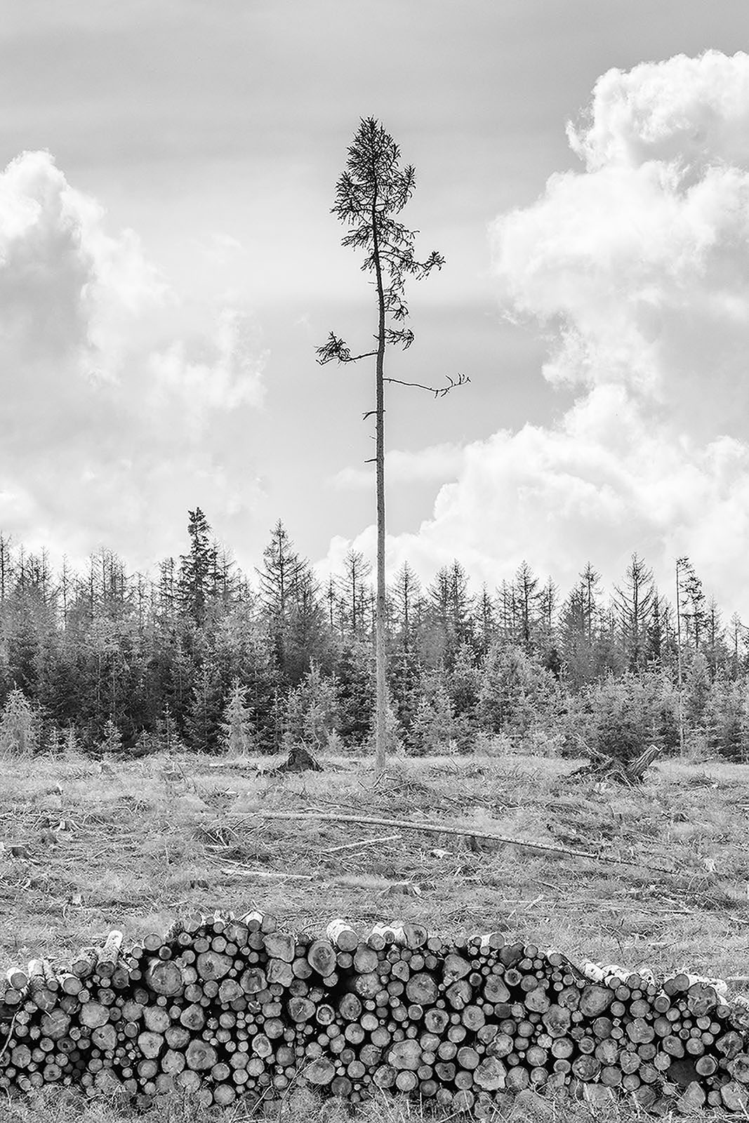 The Dying Forest - Black & White Photography Series - Harz National Park Germany